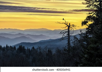 An owl sits and watches over the Smoky Mountains at sunset