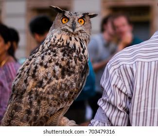 Owl sitting on an arm
