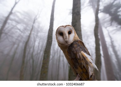 Owl sitting on a branch in a foggy forest