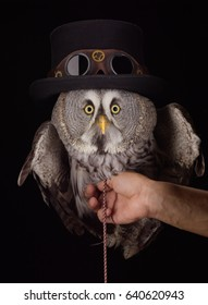 owl in steampunk's hat