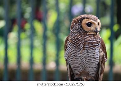 owl turning to left