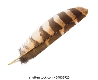 Owl wing feather isolated.