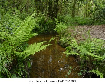 Owlbeech Woods - Horsham, West Sussex
