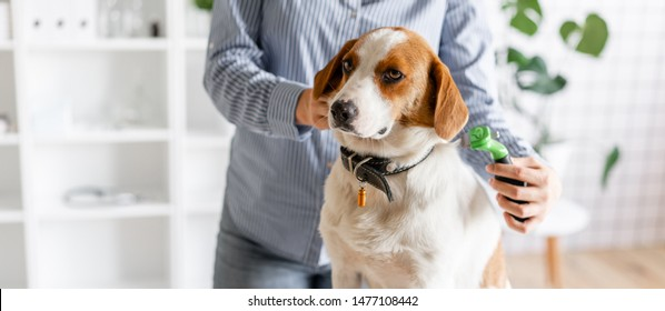 The owner combs the dog's hair with a comb. Close up. Blurred background.