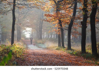 owner with dog walking in autumn forest, Netherlands