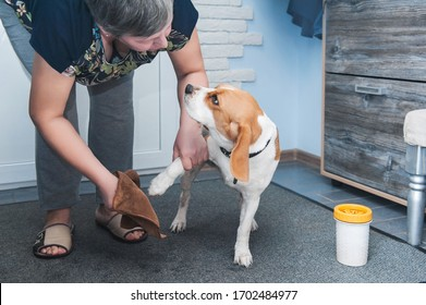 the owner of the dog washes her dirty paws after walking in a special device for washing paws and rags