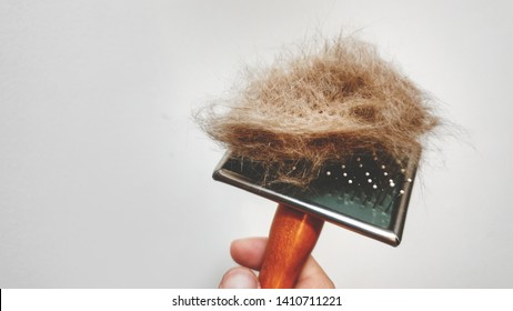 Owner hand holding comb of pet brush with pet fur clump after grooming.