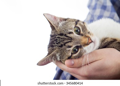Owner hands holding a cat.Man hands holding a little cat in his hands.Cat Adoption.Cat care.