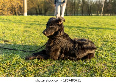 The owner and the happy black dog on the grass are walking on a summer day in the park on a sunny day on a training exercise excerpt nearby