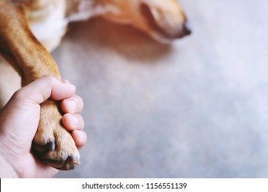 owner petting his dog, Hands holding paws dog are taking shake hand together while he is sleeping or resting with closed eyes. empty space for text.