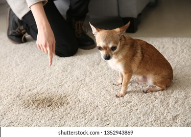 Wast Dog Images, Stock Photos & Vectors   Shutterstock