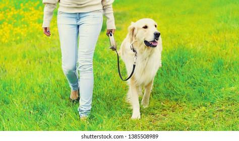 Chien De Garde Images Stock Photos Vectors Shutterstock