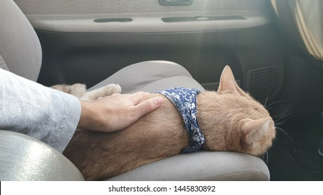owner's hand stroking an adorable bright orange cat who wearing fabric collar.A ginger cat lying on the car seat inside a car when travel with owner on vacation.