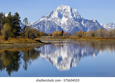 Oxbow Bend at Grand Teton National Park during the colorful fall season. Mount Moran is reflected in the river.
