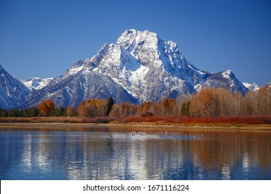 Oxbow Bend viewpoint on mt. Moran, Snake River and its wildlife during autumn, Grand Teton National park, Wyoming, USA