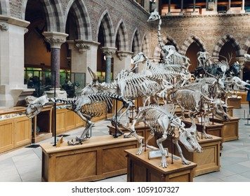 OXFORD, ENGLAND - JANUARY 25: Natural History Museum in Oxford, England on 25 January, 2018