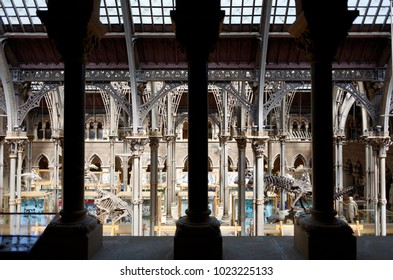 Oxford, England UK - 05/21/2015 : Oxford University Museum of Natural History, exhibits and architecture.