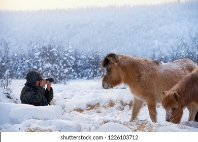 Oymyakon, Republic of Sakha (Yakutia)/Russia-February 05 2018:  a man sitting in the snow photographs the Yakut horses. Yakutian horses graze near Oymyakon village. Pole of Cold