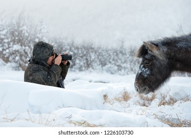 Oymyakon, Republic of Sakha (Yakutia)/Russia-February 05 2018:  a man sitting in the snow photographs the Yakut horse. Yakutian horse graze near Oymyakon village. Pole of Cold