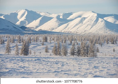 Oymyakon, Yakutia, Russia. Winter landscape,  snow-covered trees on the background of the mountains