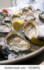 Oyster of the Atlantic Ocean