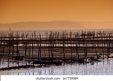 oyster bed in the basin of Arcachon