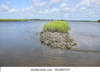 Oyster Bed in Mayport Florida Inner Coastal Waterways
