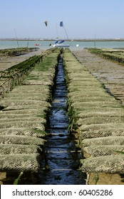 Oyster beds at Ronce les Bains is an area dependent on the Tremblade, region Charente Poitou in France