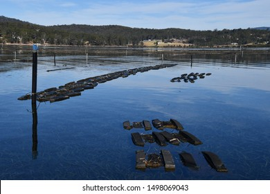 Oyster farm long-line system oyster lease for Sydney Rock Oysters  in Pambula Lake, New South Wales Australia.