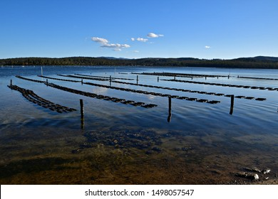 Oyster farm long-line system for Sydney Rock Oysters  in Merimbula Lake, New South Wales Australia.