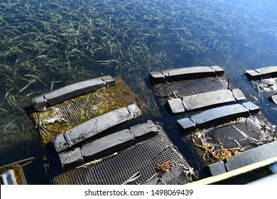 Oyster farm long-line system trays for Sydney Rock Oysters  in Pambula Lake, New South Wales Australia.