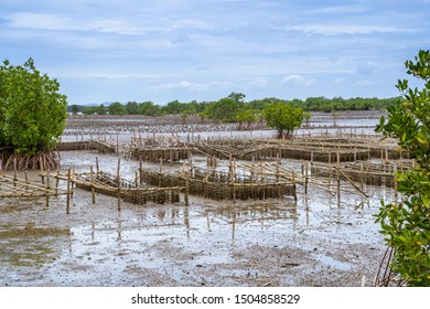 Oyster farm in the mangrove area at low tide