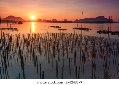 The oyster farm in southern Thailand.