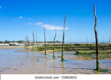 oyster farming cap ferret is a headland, french department of Gironde and region of Aquitaine. The headland takes the form of a spit, which separates the Atlantic Ocean