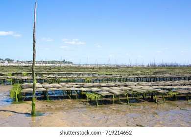 oyster farming cap ferret is a headland, french department of Gironde and region of Aquitaine. The headland takes the form of a spit, which separates the Atlantic Ocean from Arcachon