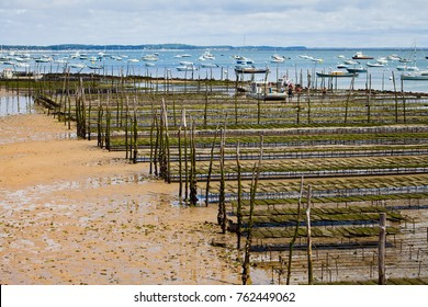 Oyster farming in France.