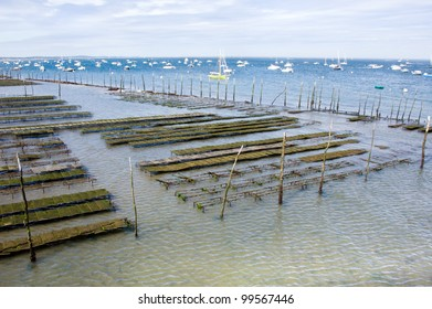 oyster farming, Pier of Cap-ferret in France