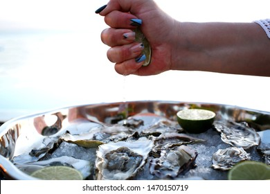 oyster fresh  atlantic oyster sea oyster sea food sea life pearl oyster shell
