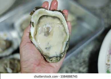 Oyster handles.Large shells.Opened fresh Oyster.Seafood Is a catering It has a high nutritional value.sea animal