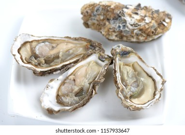 Oyster oyster image