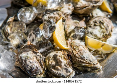 Oyster with lemon in ice in a sunny day on a foodfest.