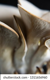 Oyster Mushroom on a dark background,  close up, macro oyster mushroom, macro mushroom, abstract food