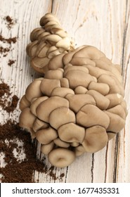 Oyster mushrooms with ground on a white, wooden background, tasty and inexpensive mushroom. View from the top.