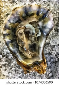 An oyster on ice