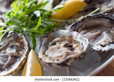 oyster on the ice