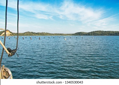 Oyster production in Etang de Diane, the east coast of Corsica, France, Europe