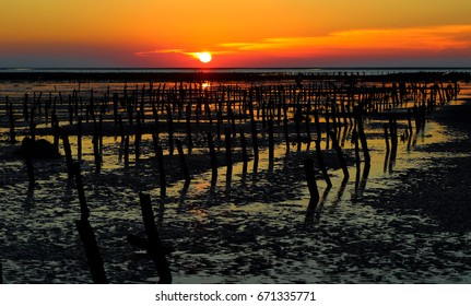 Oyster Rack at sunset