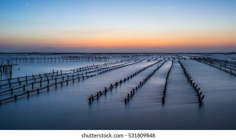 Oyster racks in the nightfall