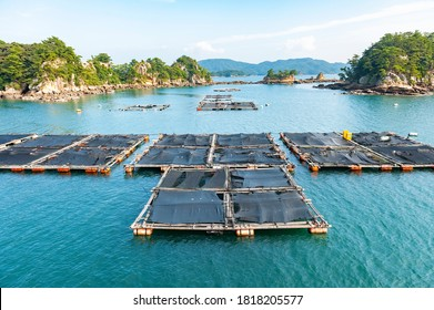 Oyster raft culture in Kujuku island (99 islands) in Sasebo, Nagasaki, Japan.