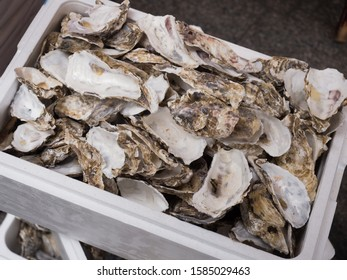 Oyster shell after shelling and stripping